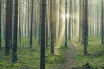 AR08_woods-(1)